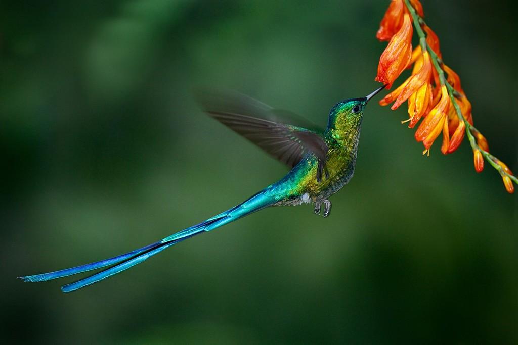 Colibri in Mindo