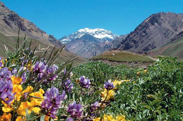 Colorful flowers with looming mountains behind