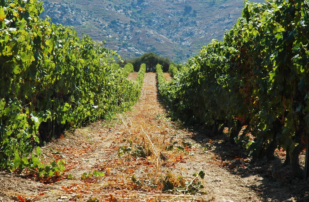 Explore Romania's Wine Region