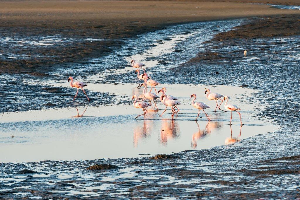 Group of flamingoes in Walvis Bay lagoon