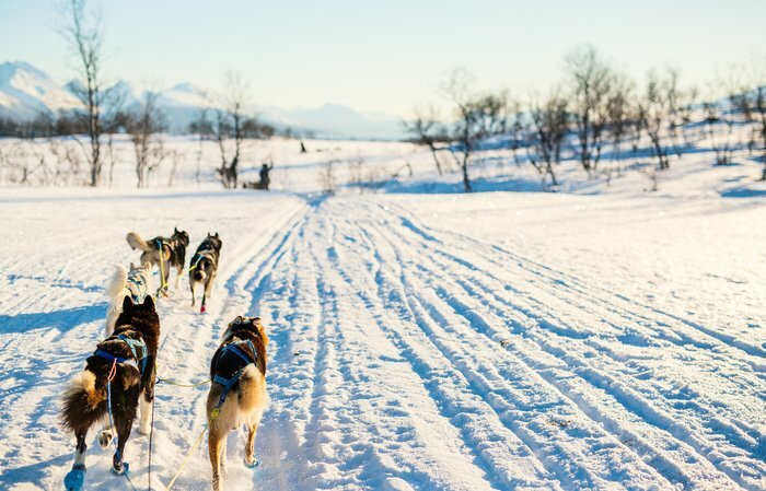 Experience the Norwegian scenery with dogsledding