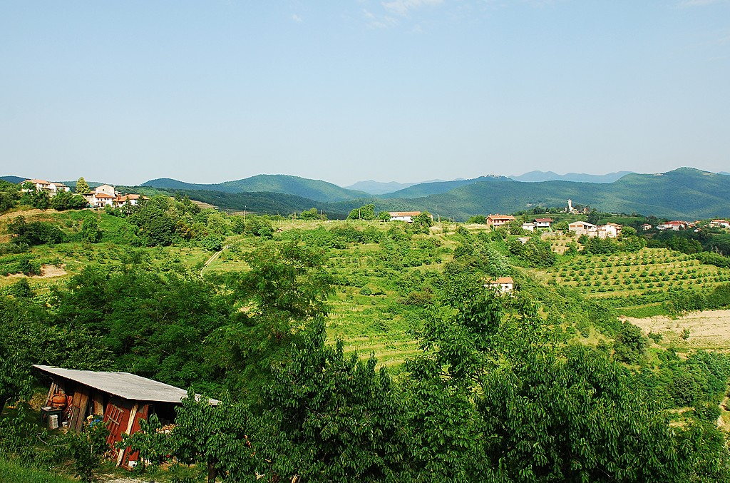 Hilly green landscapein Slovenia's wine country