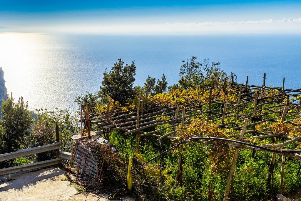 Vineyards overlooking the Mediterranean