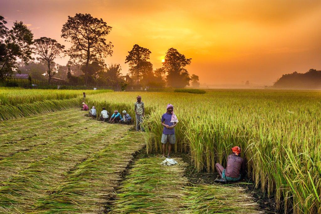 Villagers working in a rice field near Chitwan