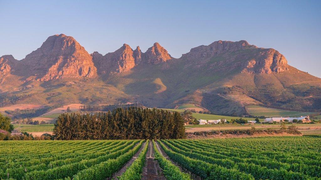 First few days of summer (early December) in Stellenbosch