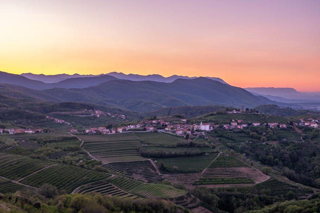 Vineyard in the Brda wine region of Slovenia