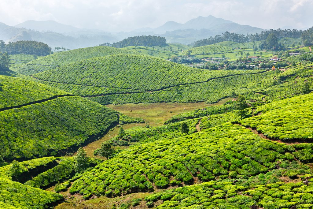 Munnar tea plantations, Kerala, India
