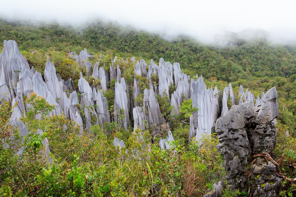 Limestone pinnacles formation at Gunung Mulu national park