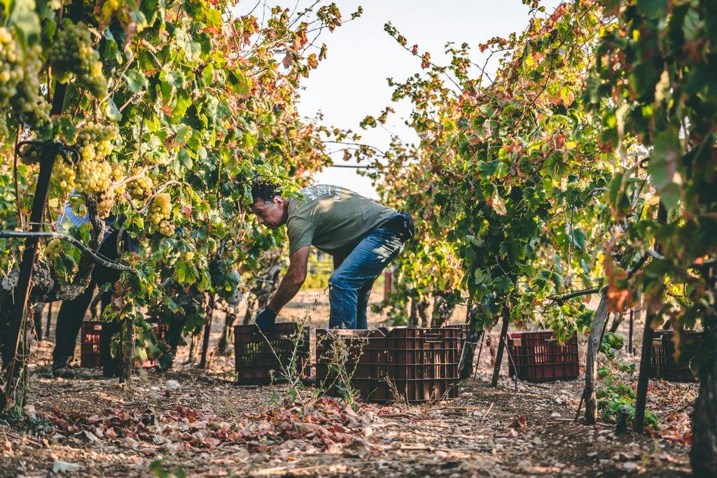 Lyrarakis Winery in Heraklion, Crete