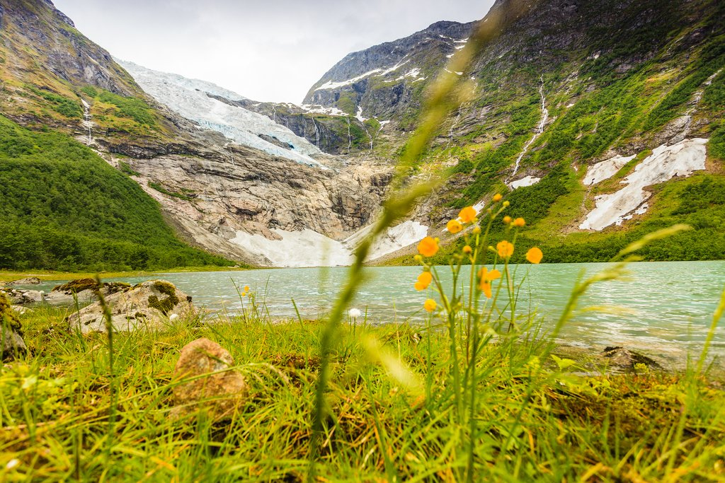 Wildflowers growing near a glacial lake