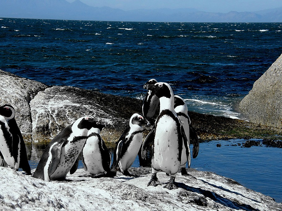 Get up close with the penguins