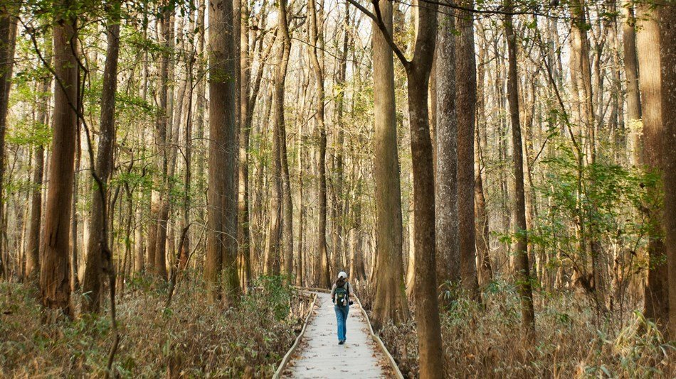 Congaree National Park, courtesy of the National Park Service