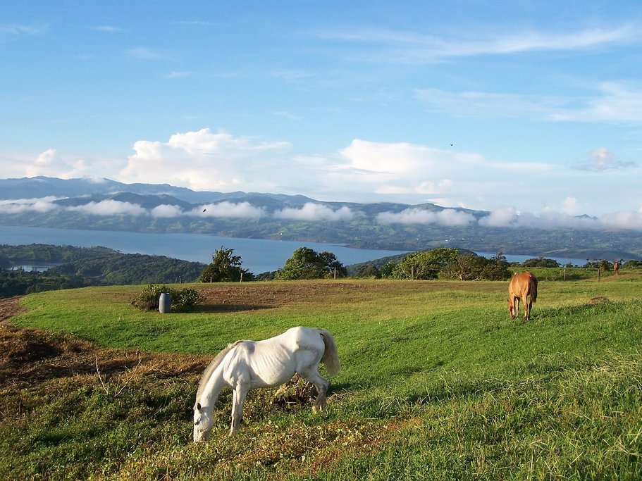 Riding Horses in Arenal