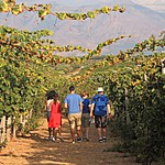The vines of wine country