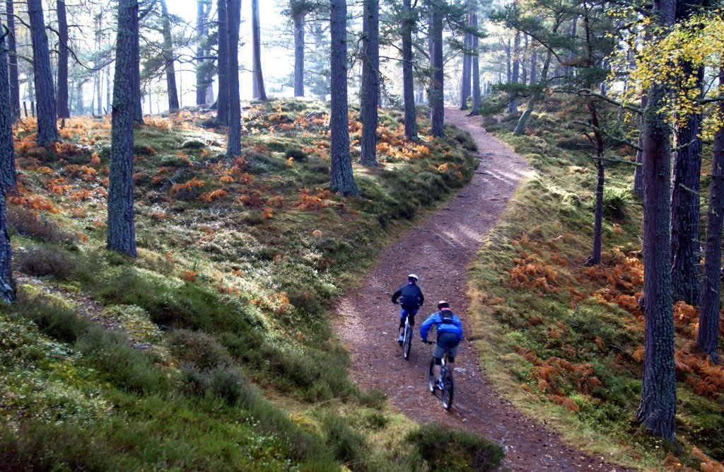 Mountain biking along  ancient forest trails.
