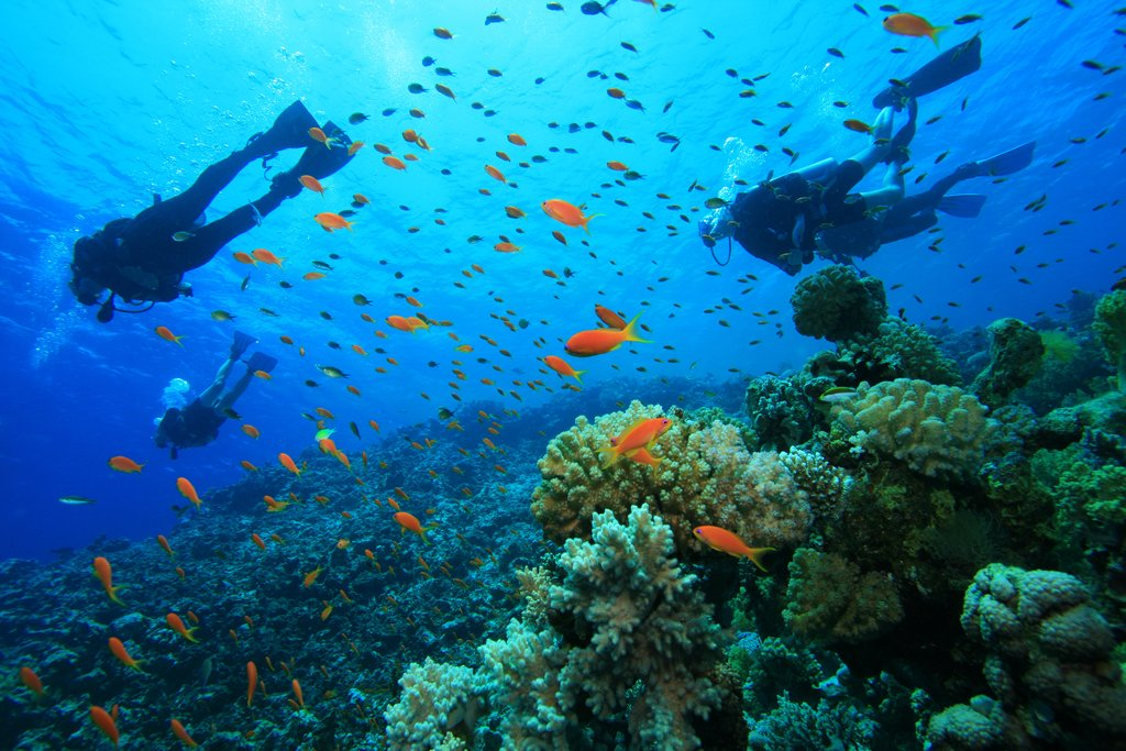 Scuba dive or snorkel in the waters of Isla del Caño