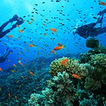 Snorkel in some of the world's clearest waters