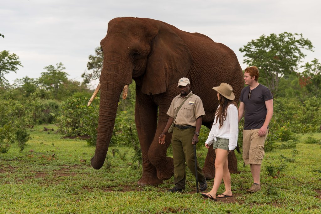Walking with elephants on an Elephant Encounter