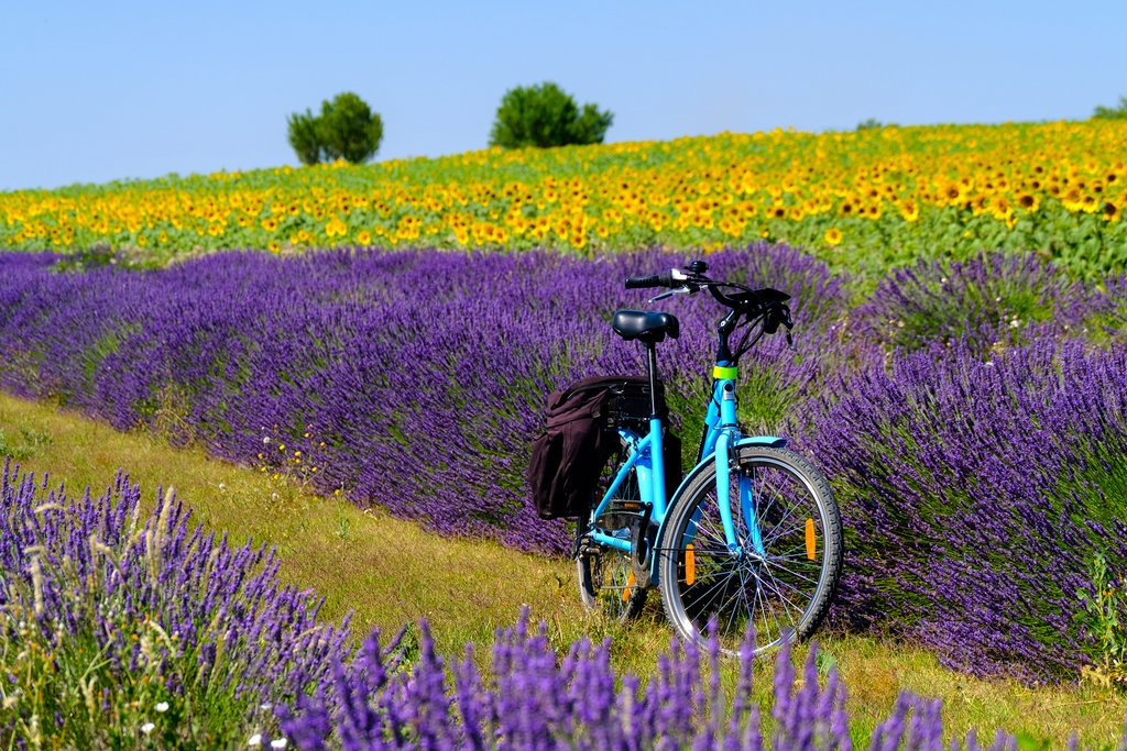 Explore the area with an electric bicycle