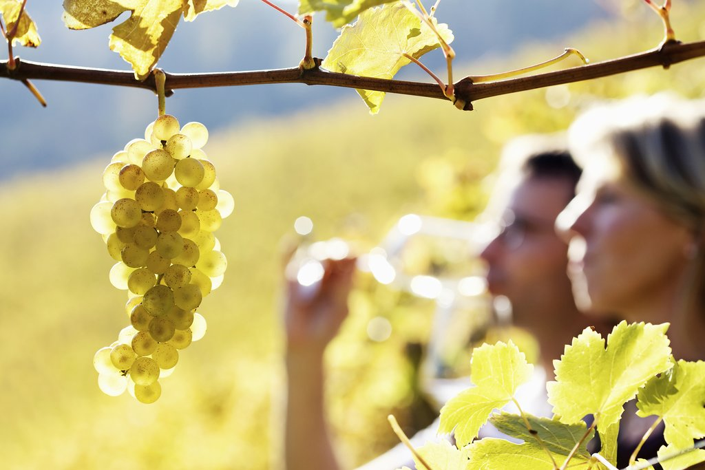 Tour the vineyards and taste the wines