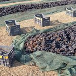 Santorini Wineries Tour & Tasting