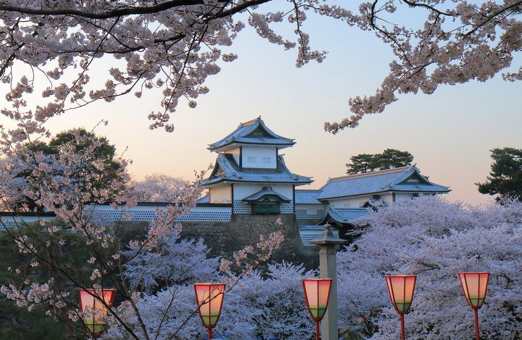Cherry blossoms surrounding Kanazawa Castle.
