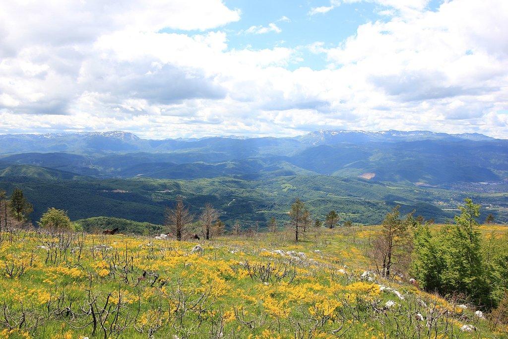 Blooming wildlife in the Bjelašnica Mountains (c) Julian Nyča