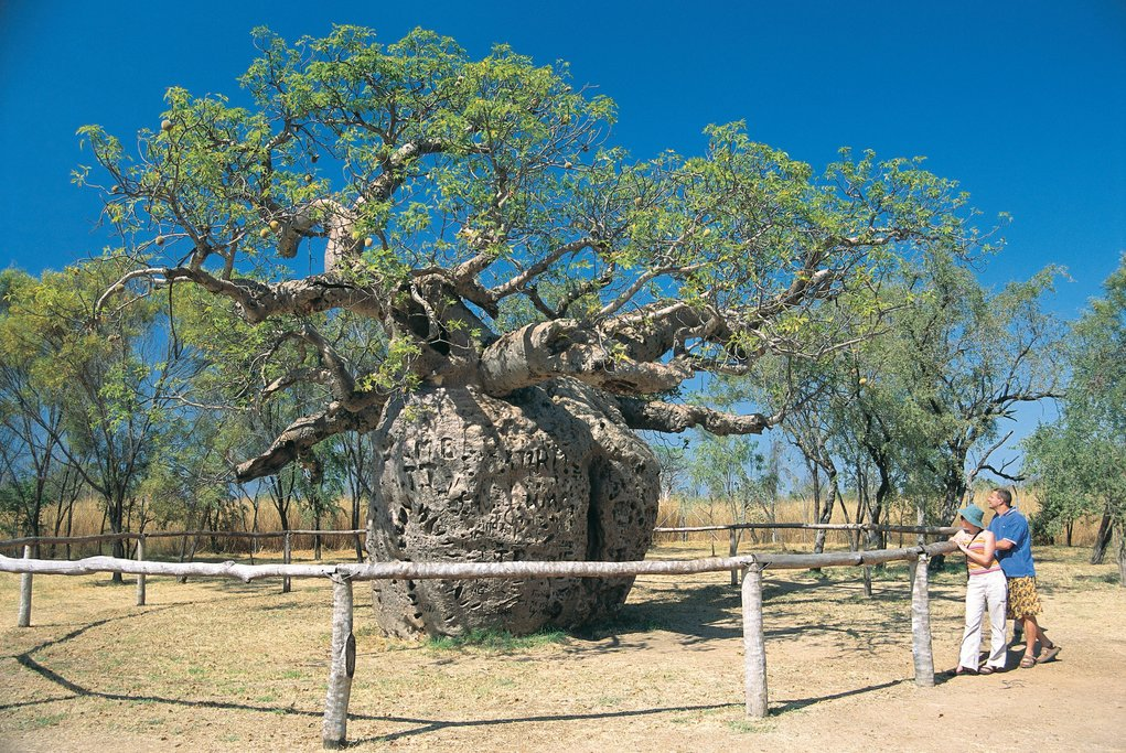 Boab Tree Prison ©Tourism Western Australia