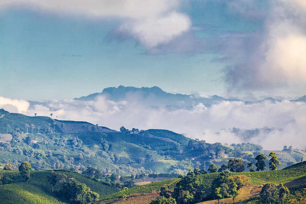 A coffee plantation near Manizales, Colombia