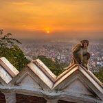 "Swayambhunath, the ""monkey temple"""