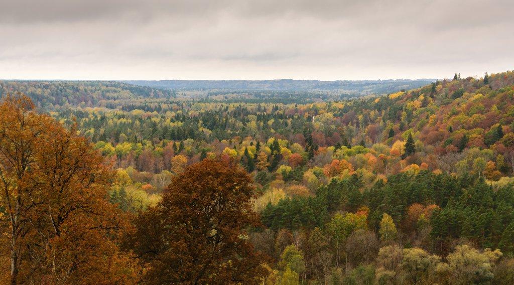 Autumn Foliage in Gauja National Park