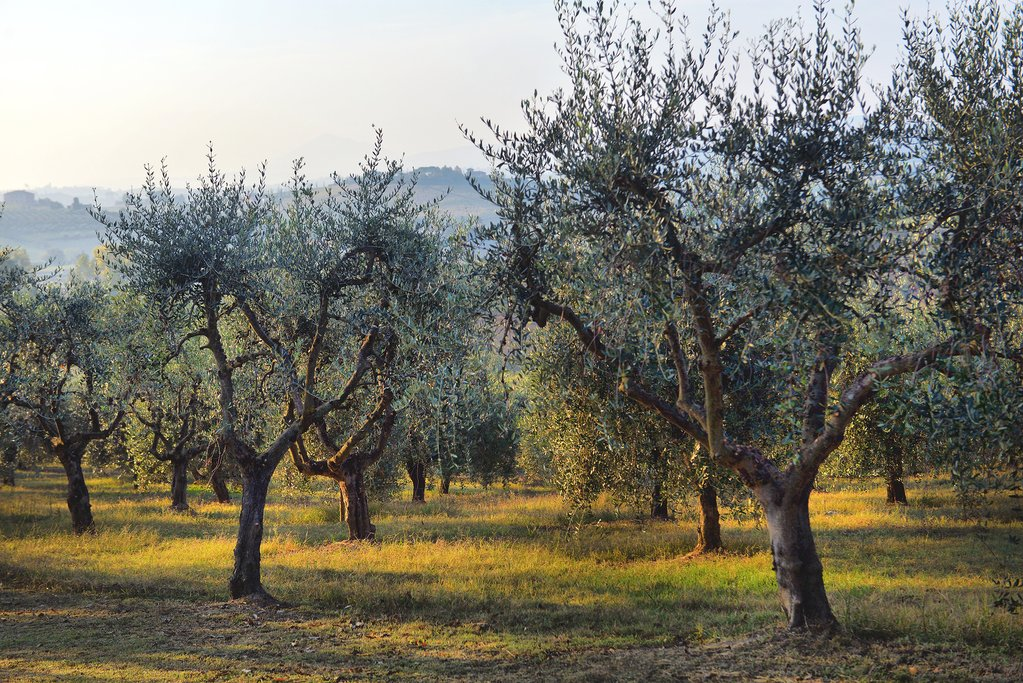 Olive Farms in Andalusia