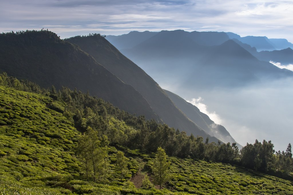 Mountains around Munnar