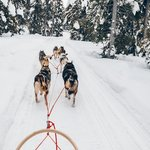 Learn to steer a pack of huskies through the Norwegian wilderness