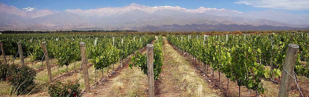 Say farewell to the vineyards of Mendoza