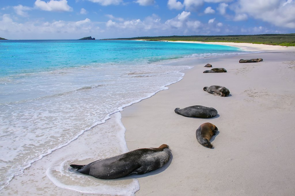 Seals on the shore of Española Island