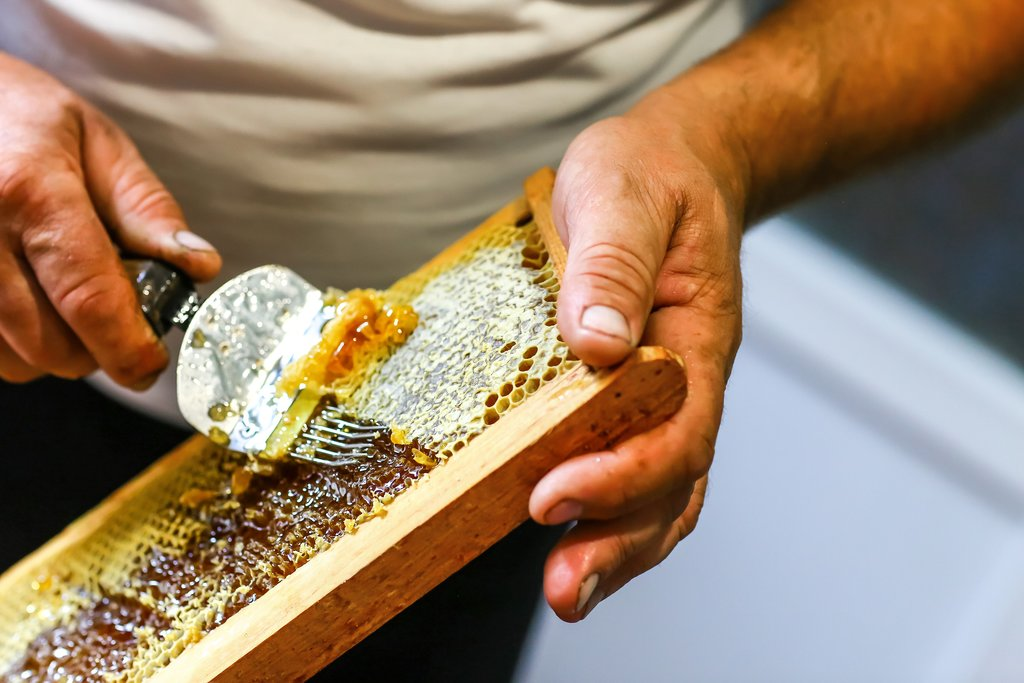 Raw honey being harvested