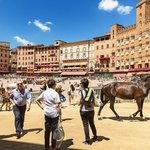 Piazza del Campo preparing for the horse race