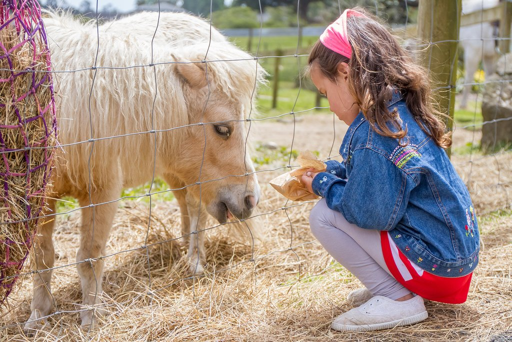 Little girl fees a pony