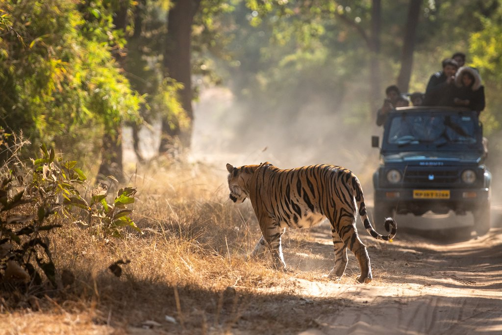Take a safari drive through the park in search of the elusive Bengal tiger