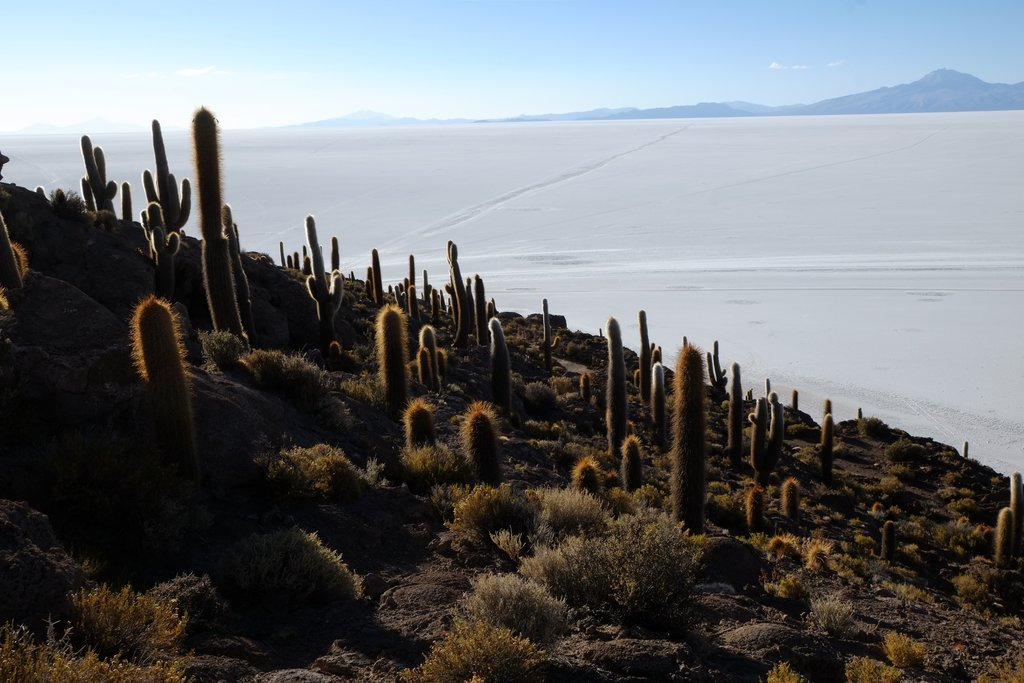 View of the salt flats from Incahuasi Island