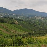 Lunch & Wine Tasting in Zagreb's Countryside