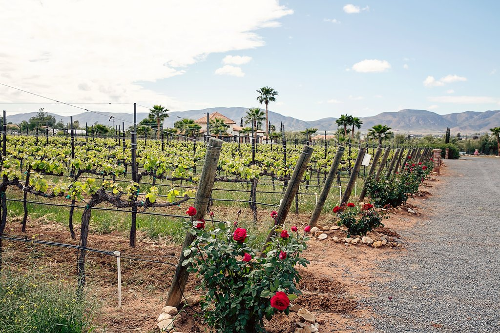 Photo courtesy of Lechuza Winery website