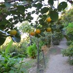 Photo from Botanical Park and Gardens of Crete