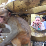 Swayambhunath, Monkey Temple  | Photo taken by Ana R