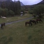 Horses grazing at Los Torres | Photo taken by Sheila S
