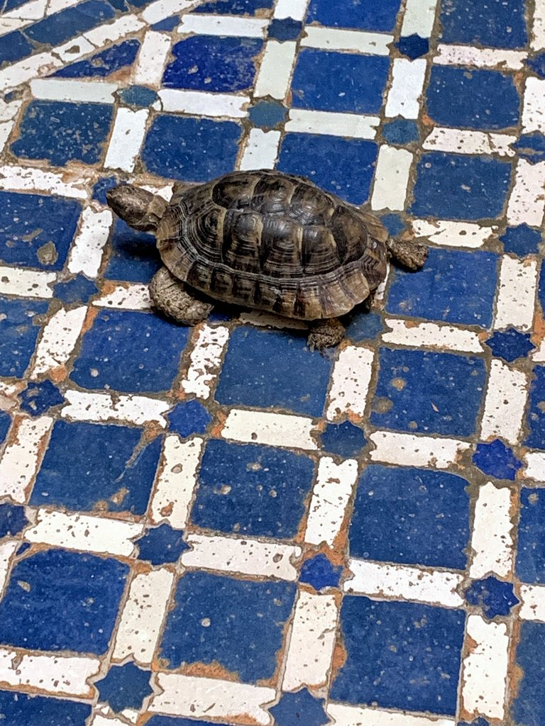Our turtle friend at Dar Roumana | Photo taken by Eileen S