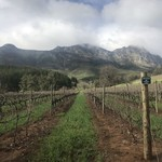 Stellenbosch | Photo taken by Missy G