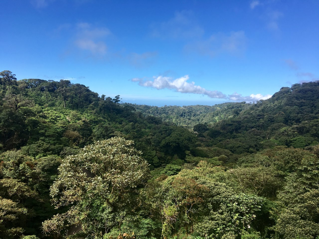 View of the Pacific Ocean from the Monteverde Cloud Forest  | Photo taken by Rachel H