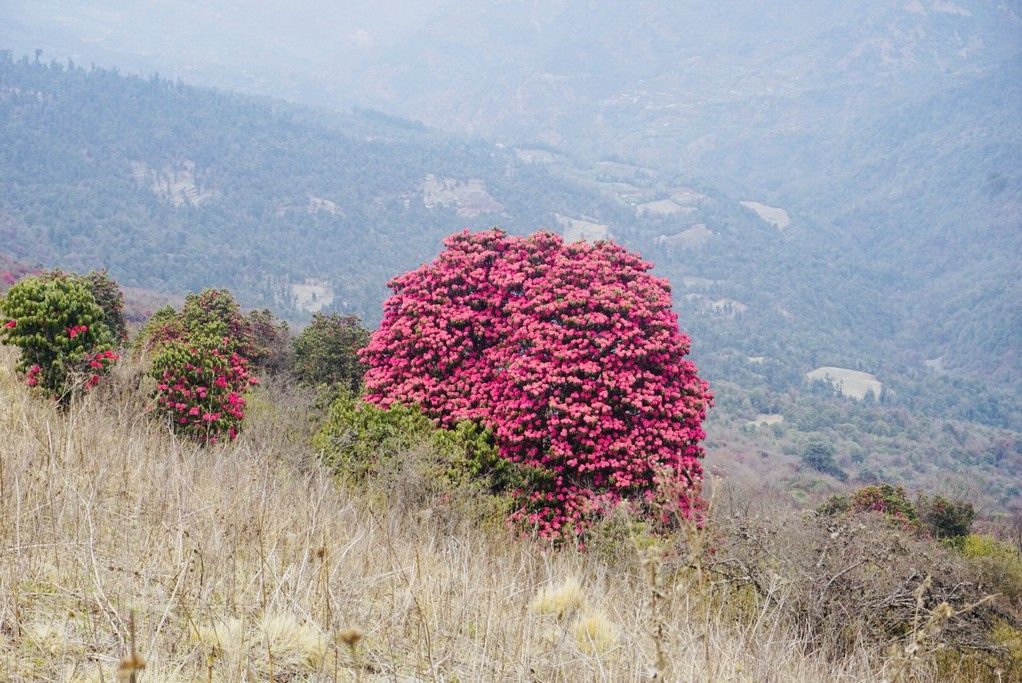 Rhododendrons  | Photo taken by LeaAnn F